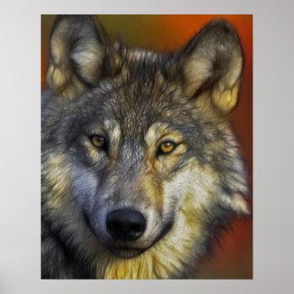 Cara de una foto del lobo póster