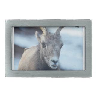 Cara de una oveja de Bighorn Hebillas De Cinturon Rectangulares