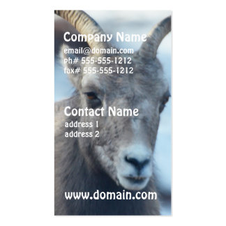 Cara de una oveja de Bighorn Tarjetas De Visita