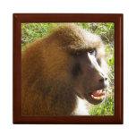 Cara del babuino que muestra los dientes cajas de joyas