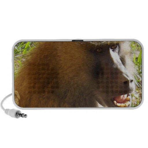 Cara del babuino que muestra los dientes laptop altavoces
