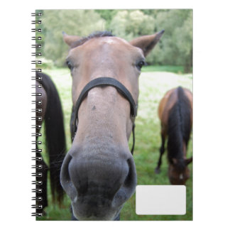 Cara del caballo cuaderno