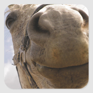 Cara del caballo pegatina cuadrada
