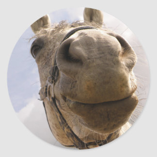 Cara del caballo pegatina redonda