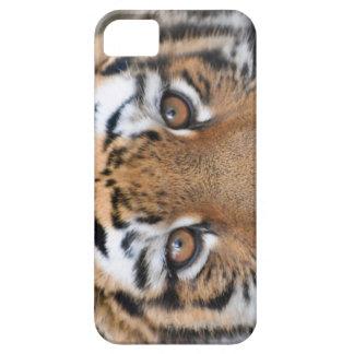 Cara del cachorro de tigre iPhone 5 Case-Mate coberturas