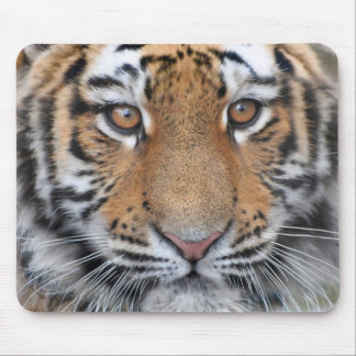 Cara del cachorro de tigre mousepads