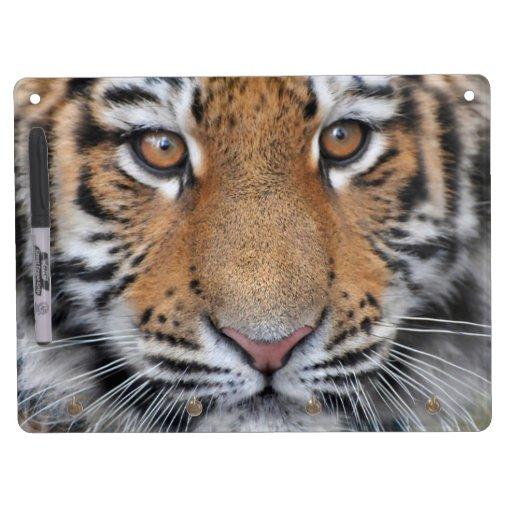 Cara del cachorro de tigre pizarra blanca
