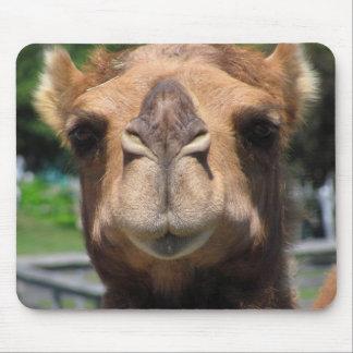 Cara del camello alfombrillas de ratón