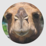 Cara del camello etiqueta redonda