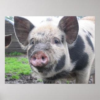 Cara del cerdo impresiones