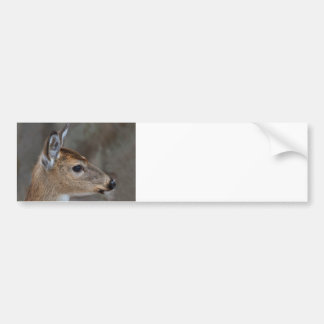 Cara del cervatillo etiqueta de parachoque