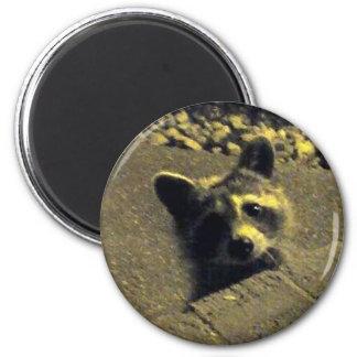 Cara del ~ del mapache de un ángel imán redondo 5 cm