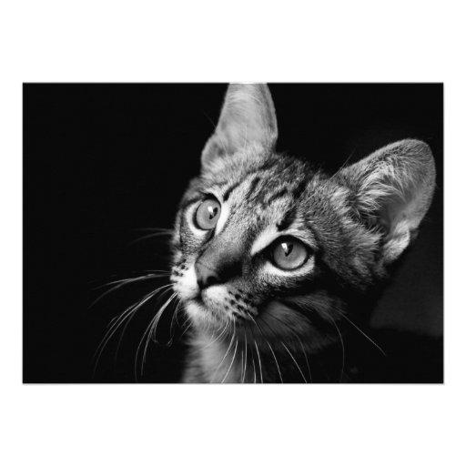 Cara del gato anuncios personalizados