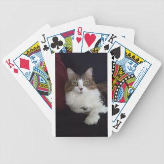 Cara del gato barajas de cartas