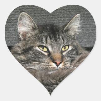 Cara del gato de Coon de Maine Calcomanía De Corazón Personalizadas