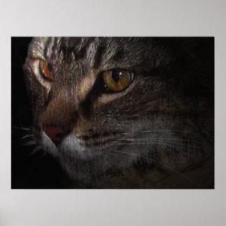 Cara del gato de Tabby del Grunge en sombra Posters