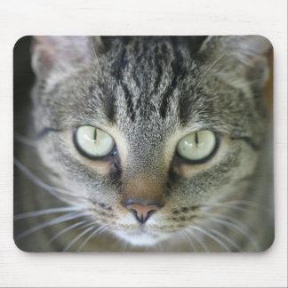 cara del gato de tigre alfombrilla de ratones