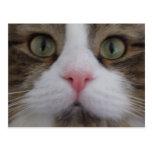 Cara del gato en la postal