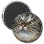 cara del gato imán de frigorifico