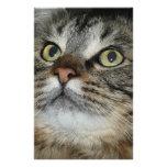 cara del gato papeleria