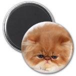 Cara del gato persa imán para frigorifico