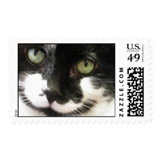 Cara del gato sello