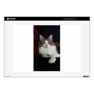 Cara del gato skins para portátil