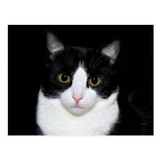Cara del gato postal