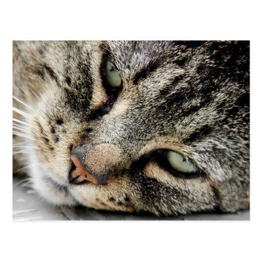 Cara del gato tarjetas postales