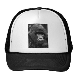 Cara del gorila de BW Gorra
