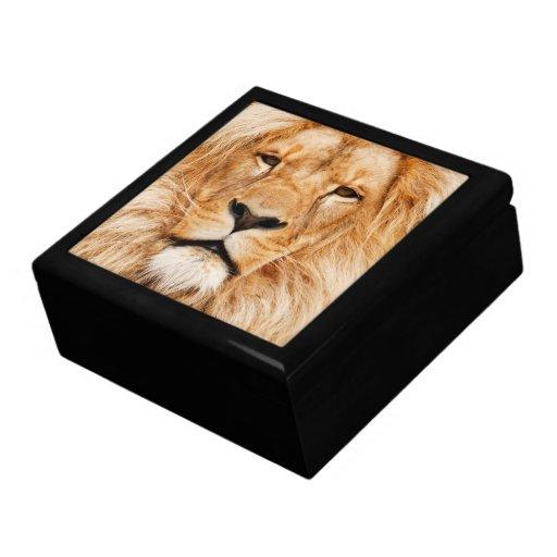 Cara del león caja de recuerdo