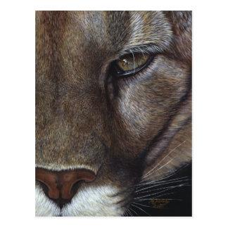 Cara del león de montaña del puma tarjetas postales