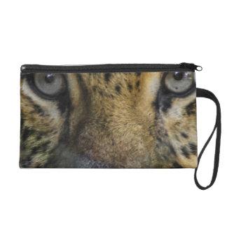 Cara del leopardo del hambre
