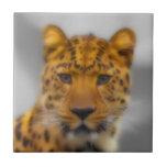 Cara del leopardo tejas