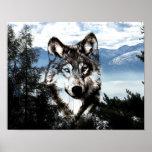 Cara del lobo póster