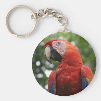 cara del macaw llavero personalizado