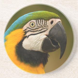 cara del macaw posavaso para bebida
