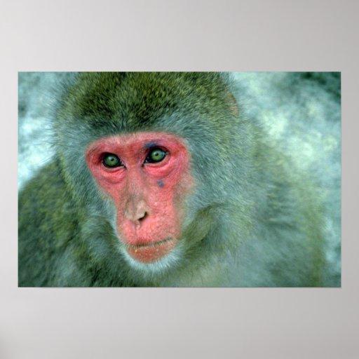 Cara del mono poster