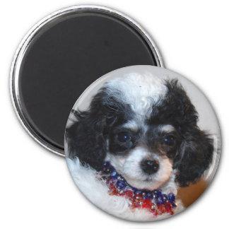 Cara del perrito del caniche de Parti del juguete Imán Redondo 5 Cm