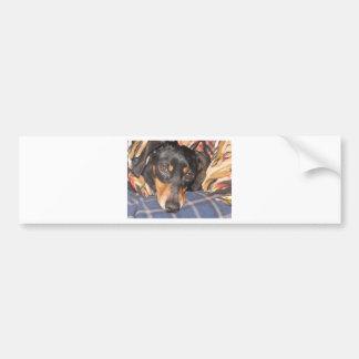 Cara del perro de Daschund Weener Pegatina De Parachoque