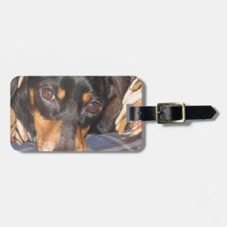 Cara del perro de Daschund Weener Etiquetas Para Equipaje