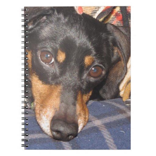 Cara del perro de Daschund Weener Libreta Espiral