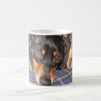 Cara del perro de Daschund Weener Taza