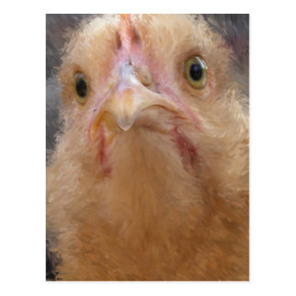 Cara del pollo tarjeta postal