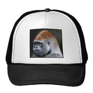 Cara del primer del gorila de la tierra baja del G Gorro De Camionero
