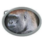 Cara del primer del gorila de la tierra baja del G Hebillas De Cinturon