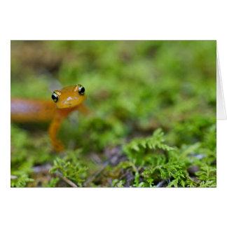 Cara del salamander de Longtail Tarjeta De Felicitación
