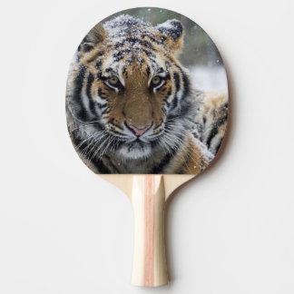 Cara del tigre del invierno pala de ping pong