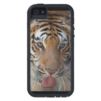 Cara del tigre iPhone 5 Case-Mate protectores