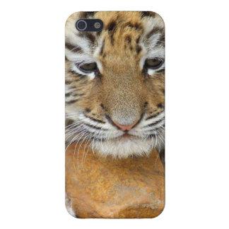 Cara del tigre iPhone 5 cárcasas